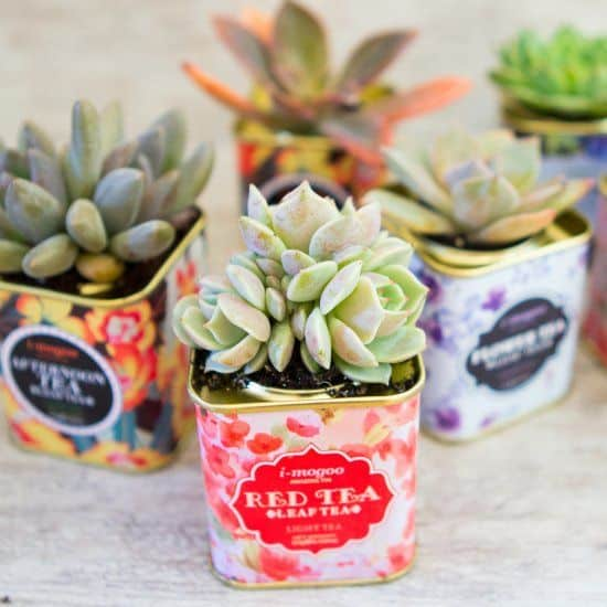 Gorgeous Succulent Planters Instantly Beautifying Your Home-homesthetics (4)