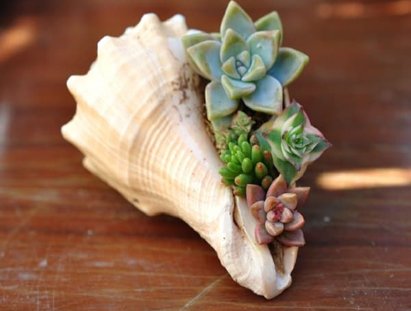 Gorgeous Succulent Planters Instantly Beautifying Your Home-homesthetics (5)