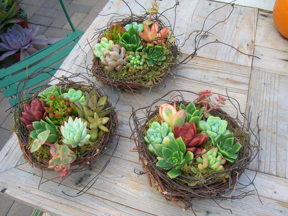 Gorgeous Succulent Planters Instantly Beautifying Your Home-homesthetics (7)