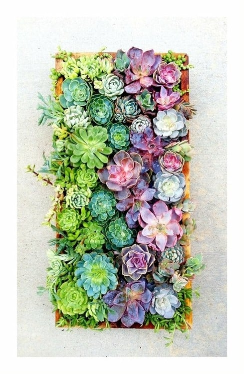 Gorgeous Succulent Planters Instantly Beautifying Your Home-homesthetics (9)