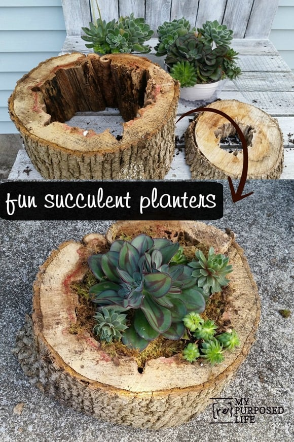 Tree-Trunk- Ideas- For-a-Warm-Decor-homesthetics (9)