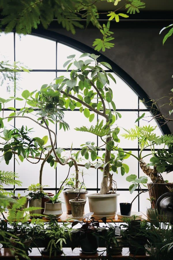 Fresh Interior Designs Fit For Plant Enthusiasts-homesthetics (1)
