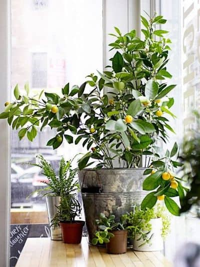 Fresh Interior Designs Fit For Plant Enthusiasts-homesthetics (10)