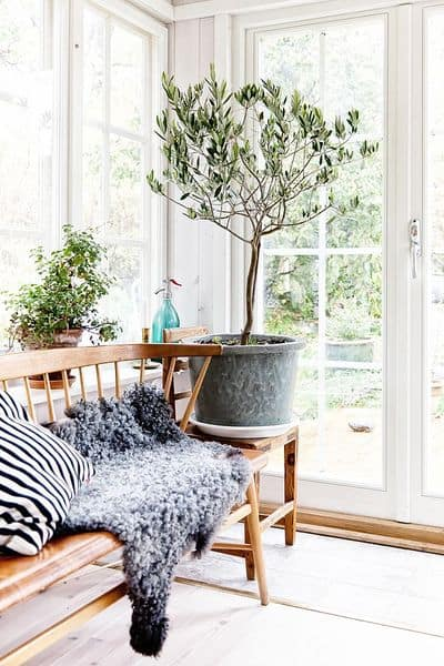 Fresh Interior Designs Fit For Plant Enthusiasts-homesthetics (12)