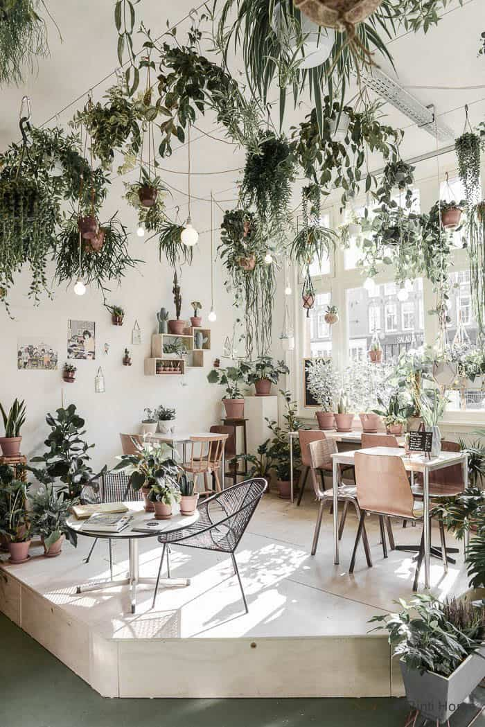 Fresh Interior Designs Fit For Plant Enthusiasts-homesthetics (5)