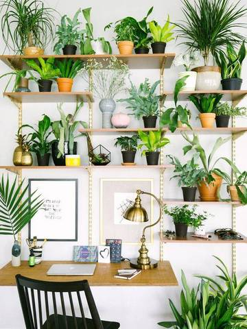 Fresh Interior Designs Fit For Plant Enthusiasts-homesthetics (7)