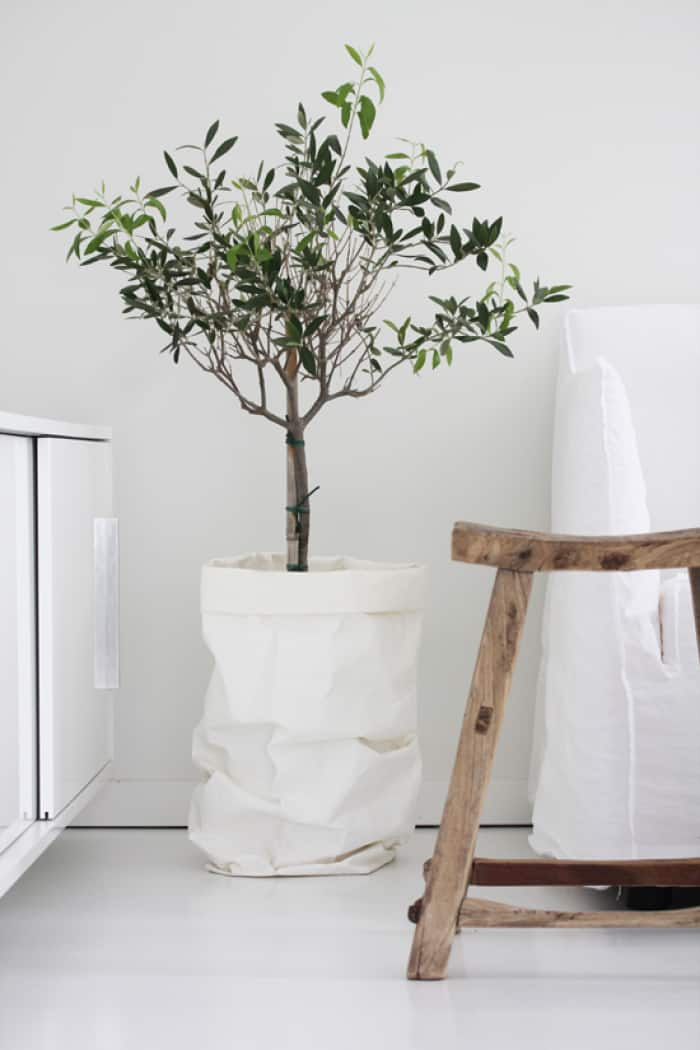 Dress up your olive tree pot in a white cloth sack