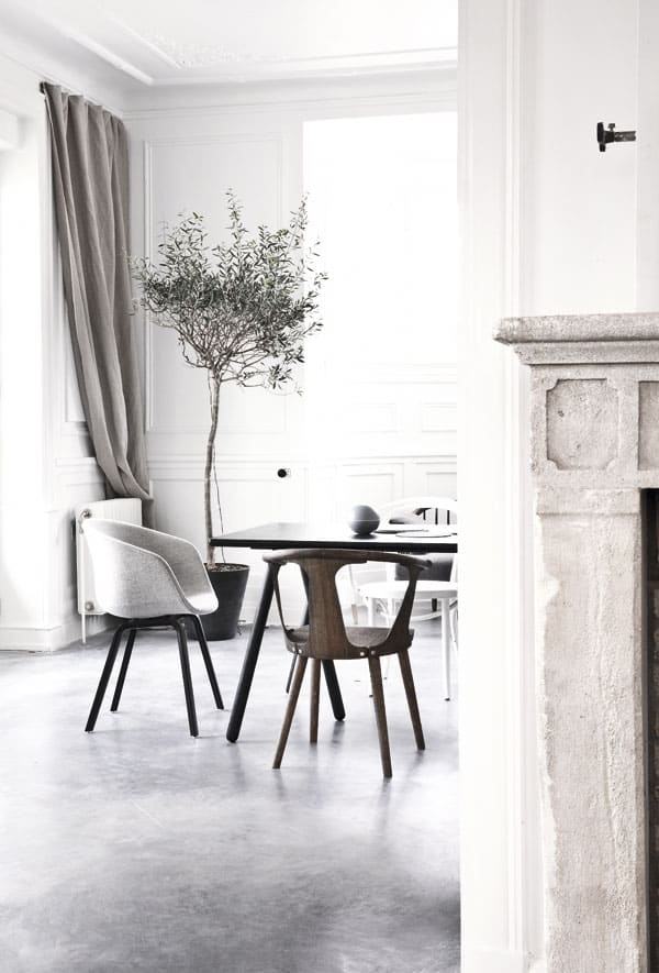 olive tree will complement a modern minimal approach to interior design