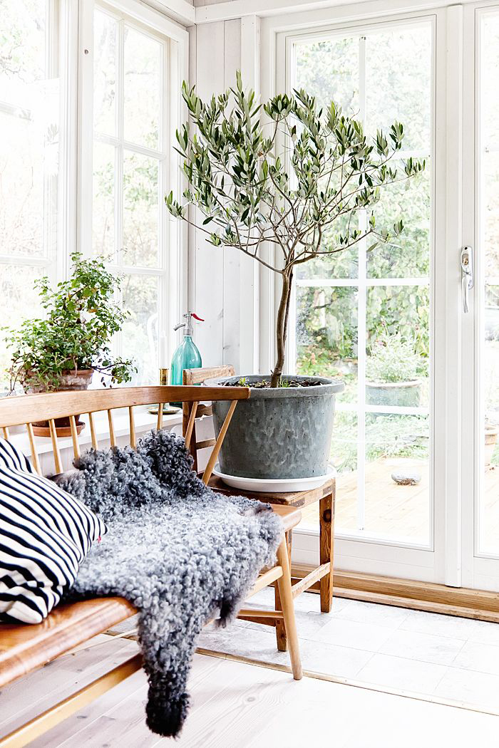 Fresh Scandinavian interior decor hosting greenery and life