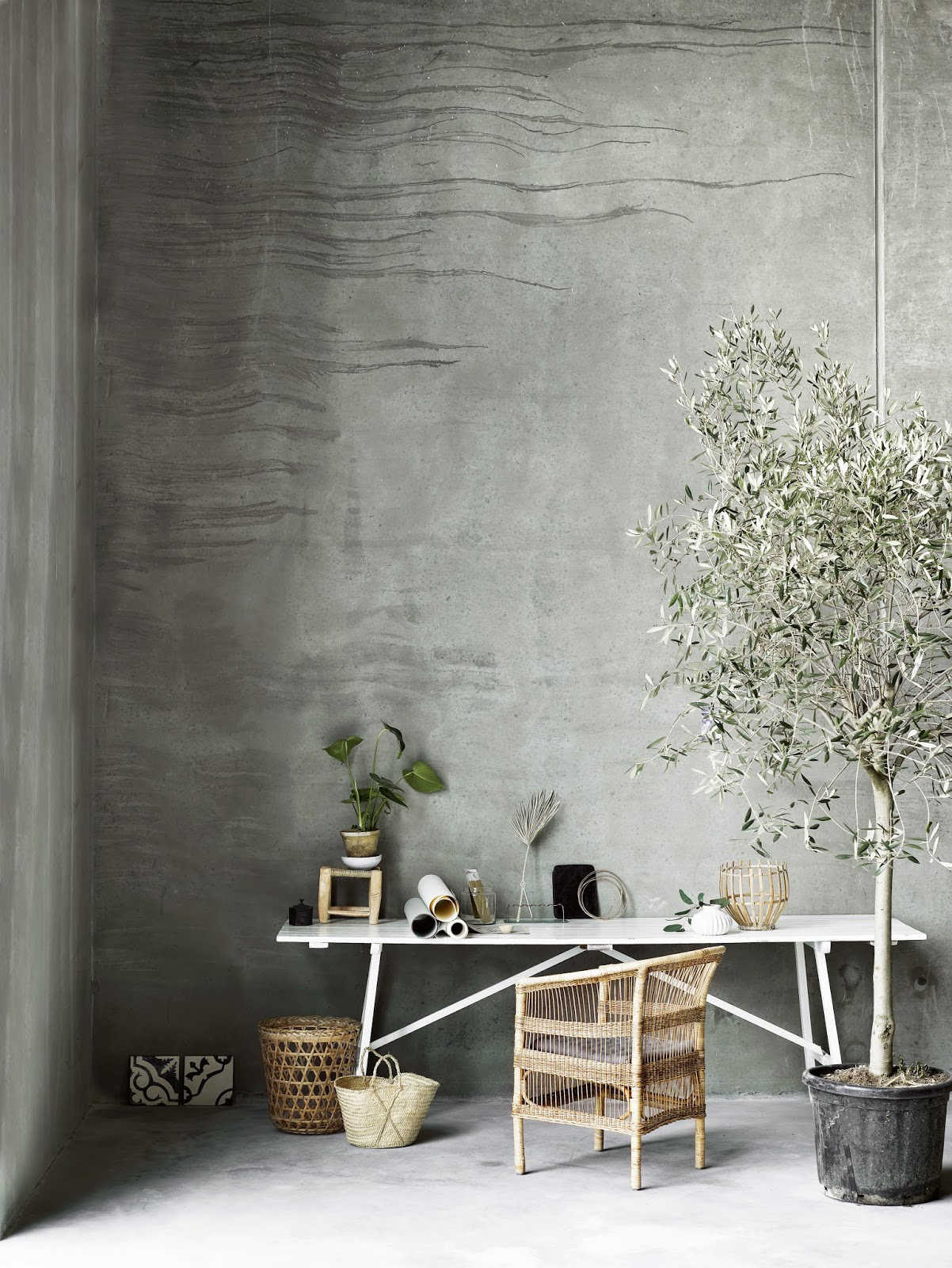 Guide To Growing Olive Trees Indoors-homesthetics (26)