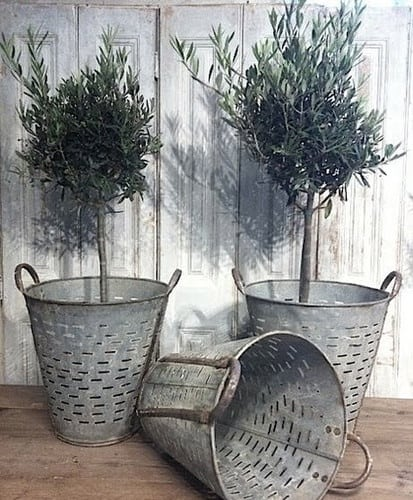 Galvanized buckets and the olive green will make a wonderful contrast