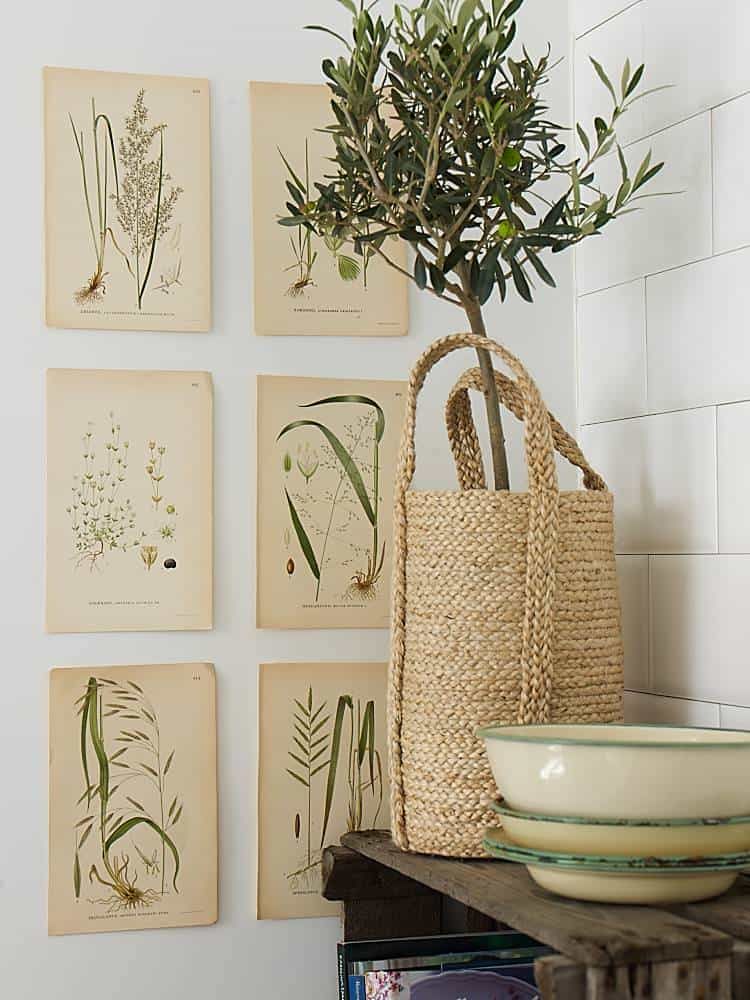 Pastel tones and old plants illustrations are completed with a wicker basket containing the delicate olive tree