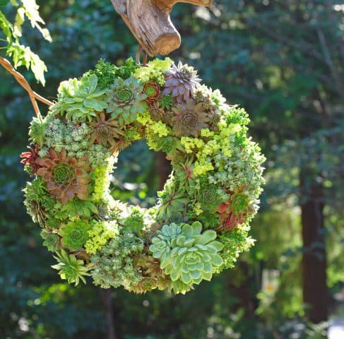 15 Spectacular Succulent Wreaths and Monograms That Will Transform Your Porch (3)