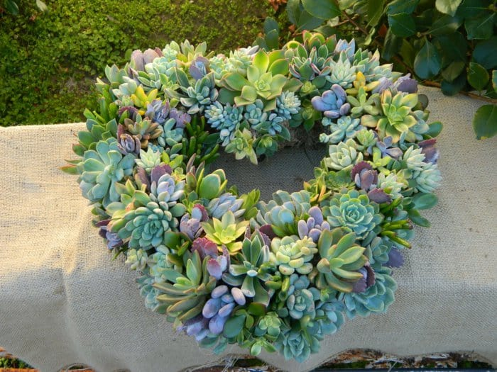 15 Spectacular Succulent Wreaths and Monograms That Will Transform Your Porch (4)