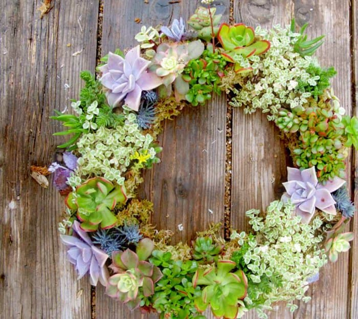 15 Spectacular Succulent Wreaths and Monograms That Will Transform Your Porch (6)