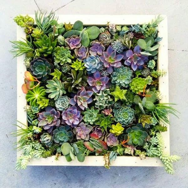 16 Splendid Succulent Planter Frames to Beautify Your Home (1)