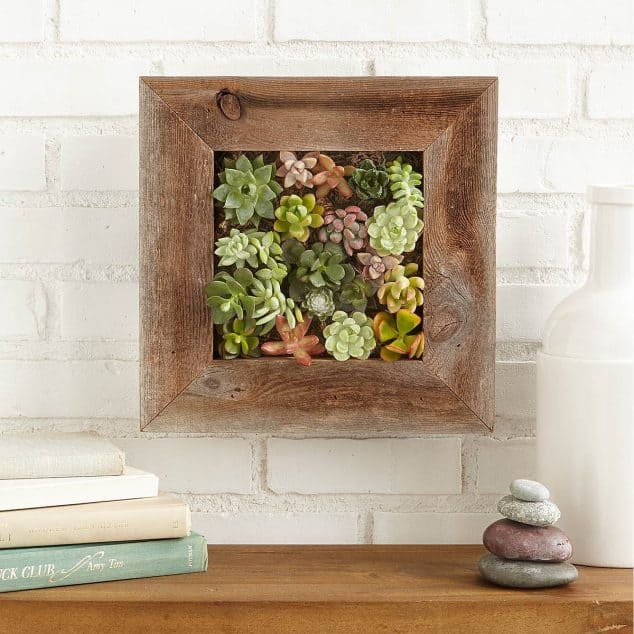16 Splendid Succulent Planter Frames to Beautify Your Home (10)