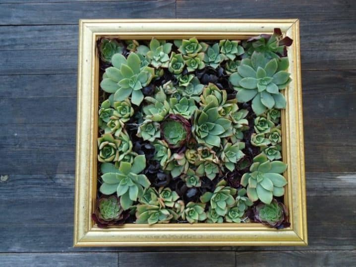 16 Splendid Succulent Planter Frames to Beautify Your Home (11)