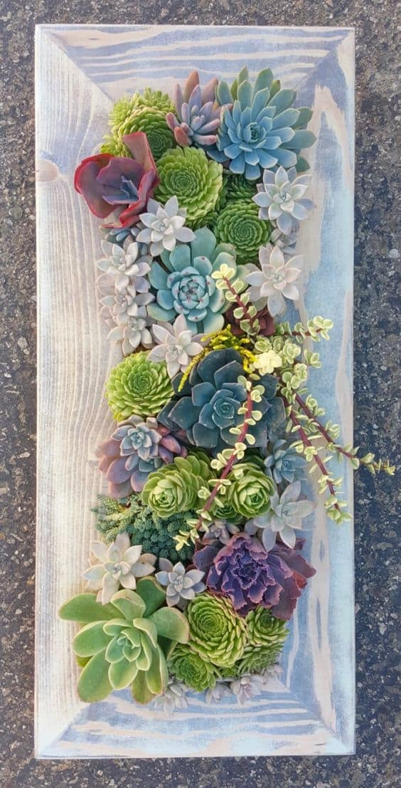 16 Splendid Succulent Planter Frames to Beautify Your Home (13)
