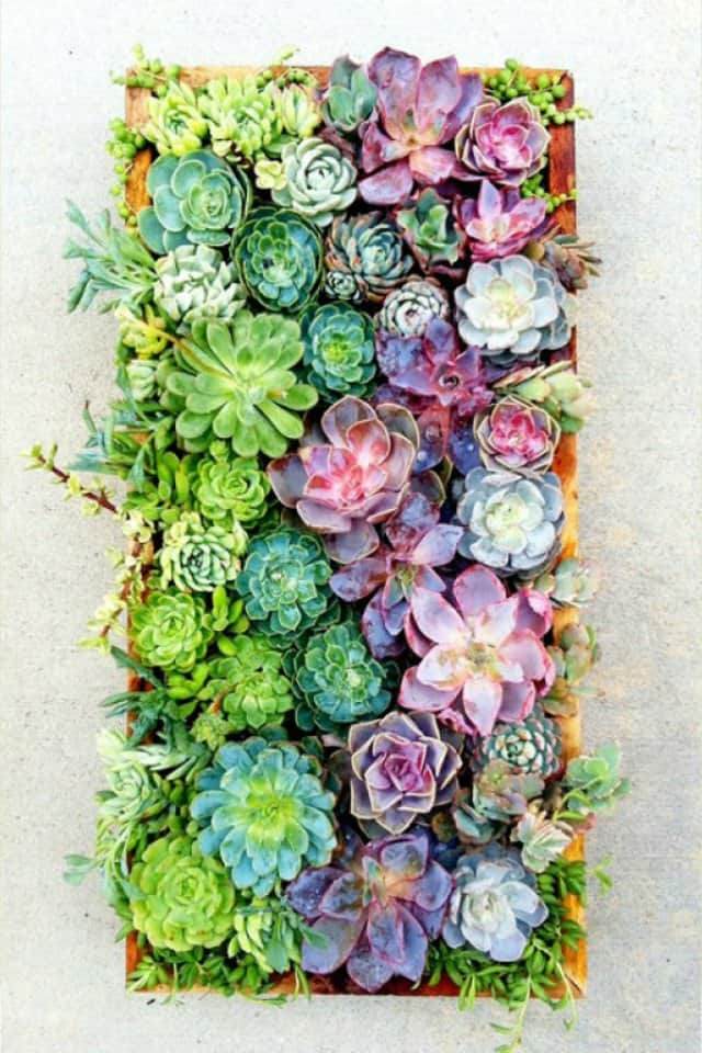 16 Splendid Succulent Planter Frames to Beautify Your Home (16)