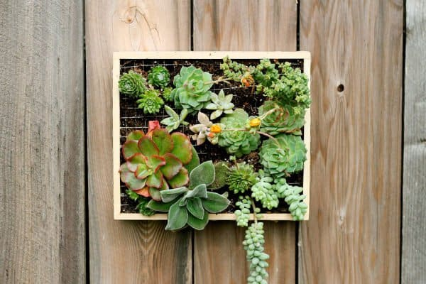 Splendid succulent planter frames to beautify your home for Fabriquer cadre vegetal mural