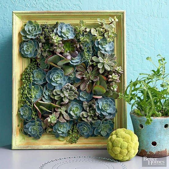 16 Splendid Succulent Planter Frames to Beautify Your Home (4)