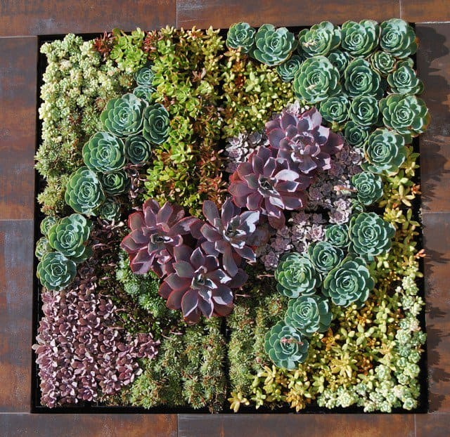 16 Splendid Succulent Planter Frames to Beautify Your Home (5)