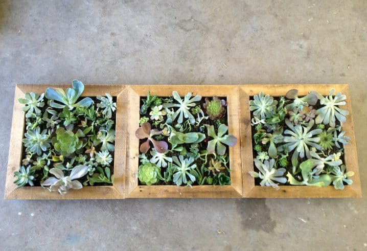 16 Splendid Succulent Planter Frames to Beautify Your Home (8)