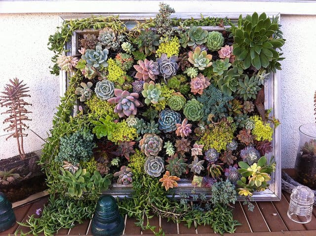16 Splendid Succulent Planter Frames to Beautify Your Home (9)