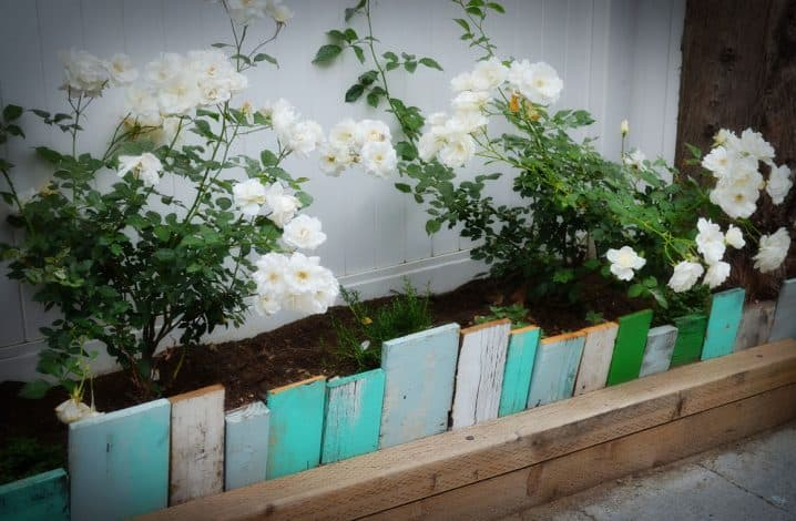 SCRAP WOOD USED AS GARDEN EDGING