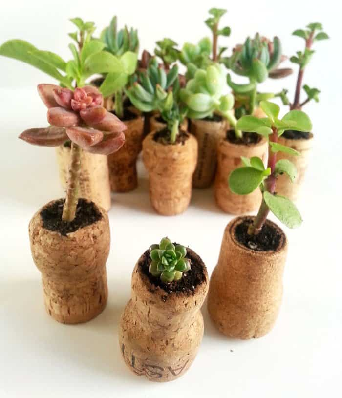 Ingenious Wine Cork Planters For Your Little Plants (14)