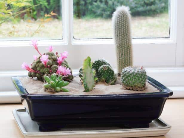selection-of-splendid-99-cacti-in-diy-flower-pots-1