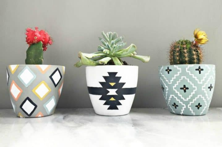Selection Of Splendid 99 Cacti In Diy Flower
