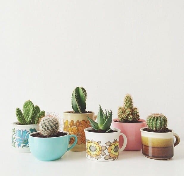 selection-of-splendid-99-cacti-in-diy-flower-pots-11