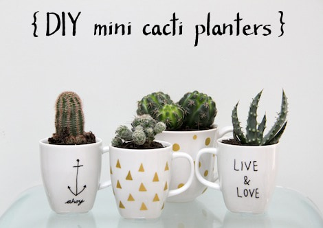 selection-of-splendid-99-cacti-in-diy-flower-pots-14