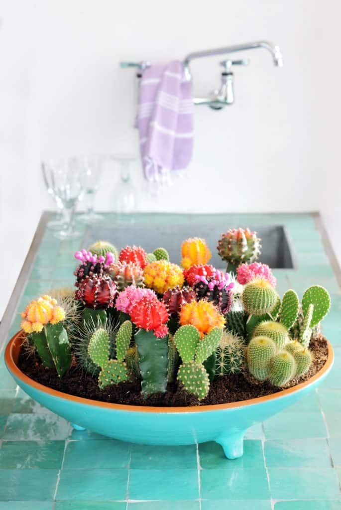 selection-of-splendid-99-cacti-in-diy-flower-pots-6