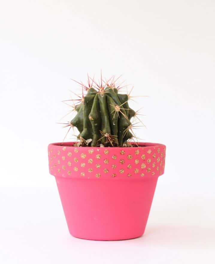 selection-of-splendid-99-cacti-in-diy-flower-pots-9