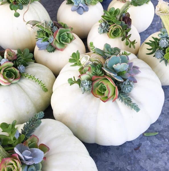 KEEP THE FALL SPIRIT AND NESTLE SUCCULENTS IN PUMPKINS
