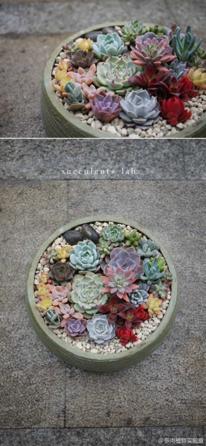 CAST YOUR OWN CONCRETE BOWLS AND ARRANGE YOUR SUCCULENTS IN A FANTASY OF HUES