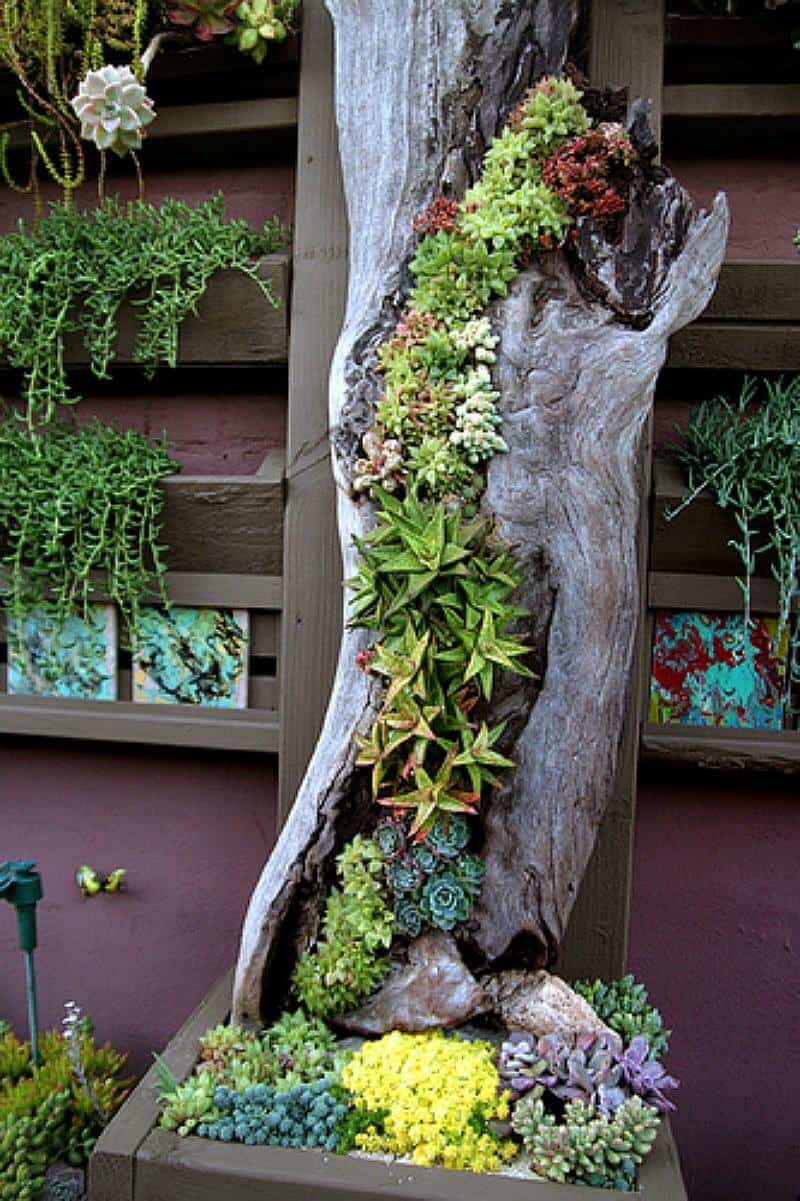 AN OLD LOG OR TREE CAN BECOME THE MOST IMPRESSIVE SUCCULENT ARRANGEMENT OF YOUR GARDEN