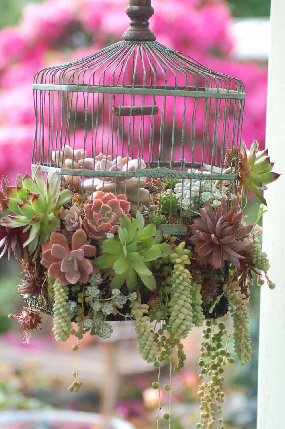 A BIRD CAGE CAN FULFILL THE ROLE OF SUCCULENT ARRNAGEMENT