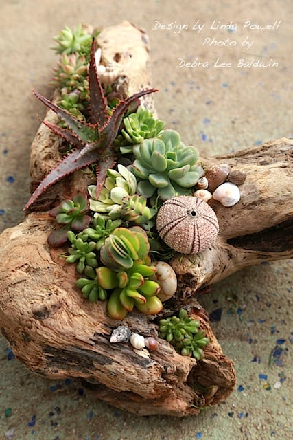 DRIFTWOOD AND SUCCULENTS FORM THE MOST ELEGANT COMBINATION