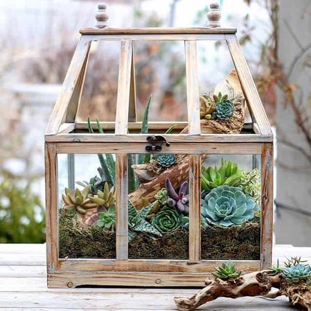 FILL A TINY GREENHOUSE WITH DRIFTWOOD AND SUCCULENTS