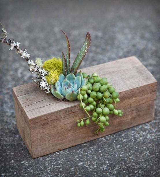 DRILL A HOLE INTO A WOOD PIECE AND NESTLE SUCCULENTS