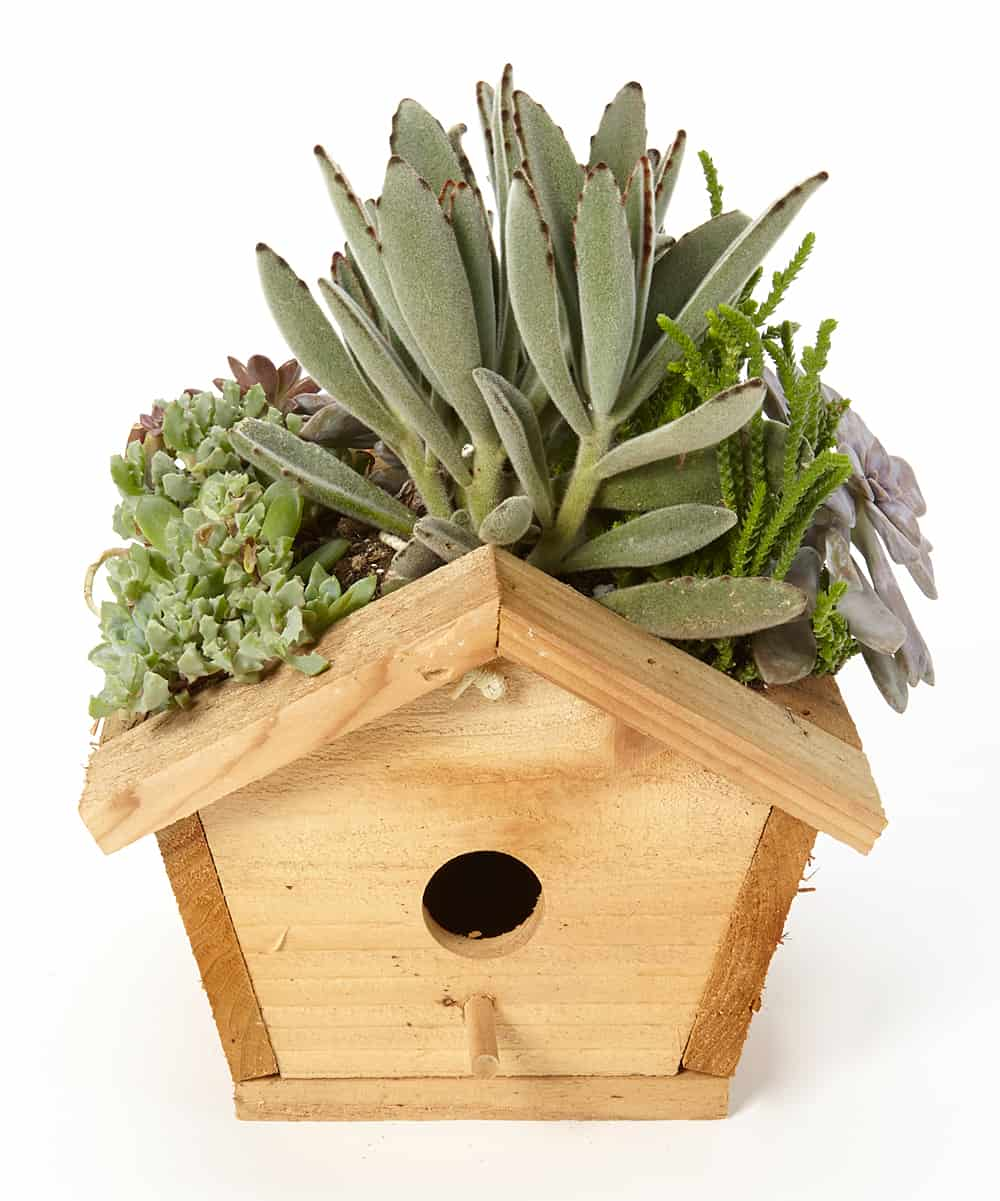A WOODEN BIRD HOUSE CAN BE TRANSFORMED INTO A PLANTER