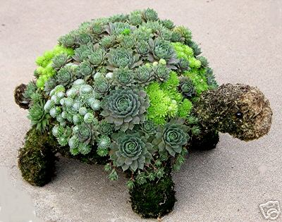 A CEMENT TURTLE CAN BECOME THE HOME FOR YOUR SUCCULENTS