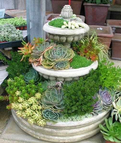AN OLD FOUNTAIN FILLED WITH SUCCULENT VARIETIES CAN BEAUTIFY YOUR GARDEN