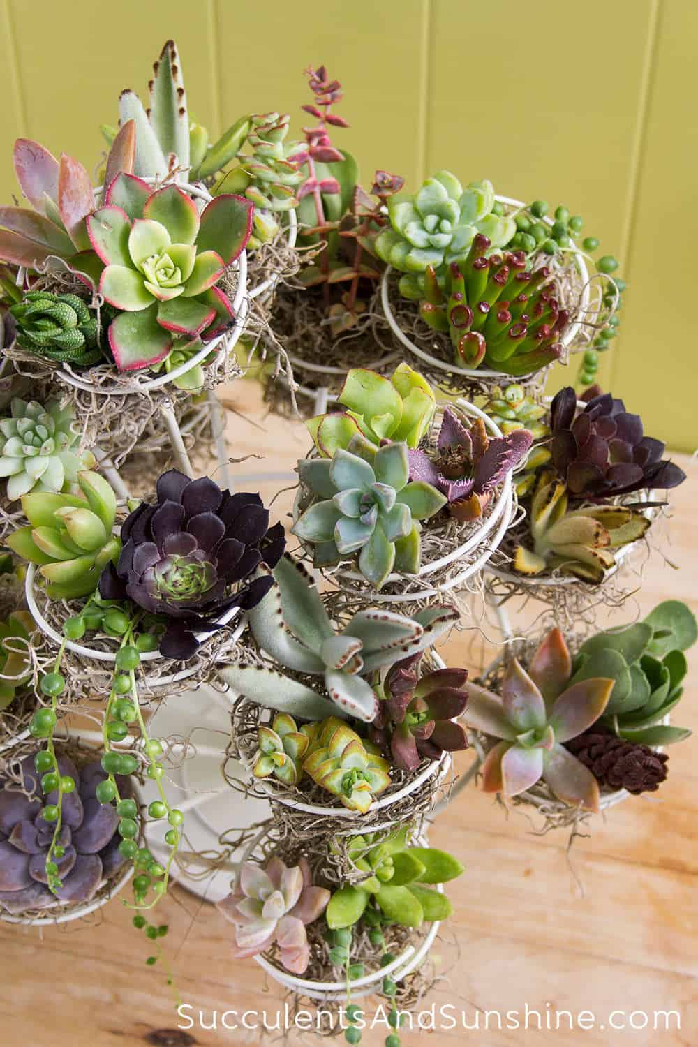 USE A METALLIC SUPPORT TO NESTLE DELICATE SUCCULENT FLOWERS