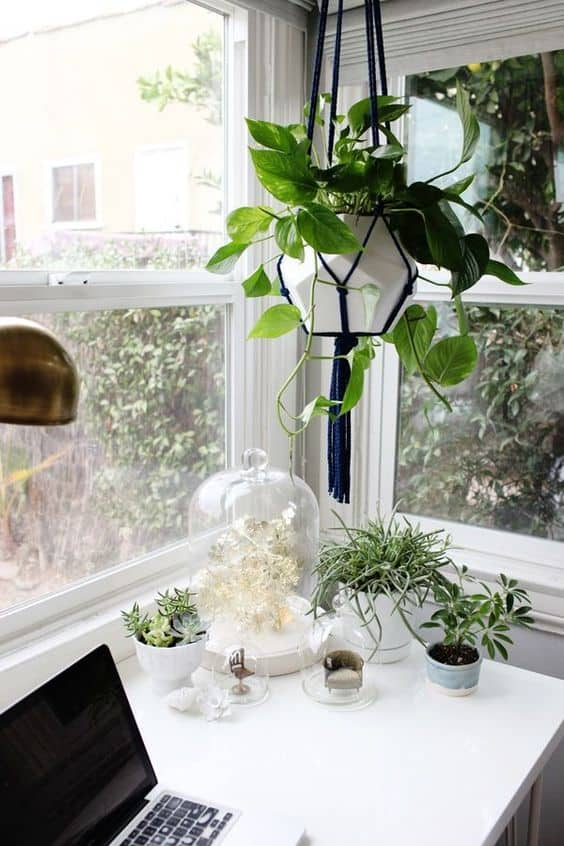 3. REFRESH WITH RESILIENT GREENERY