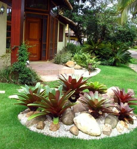 Bromeliad FOR THE LANDSCAPE